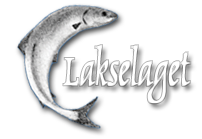 Lakselaget - Women Who Swim Against the Current